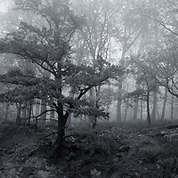 """""""Foggy Ledge"""" mono<br /> <br /> Heavy fog moving through the forest in the Blue Ridge Mountains creates a wonderful moody monochrome image!!<br /> <br /> The Blue Ridge Mountains by Rachel Cohen"""