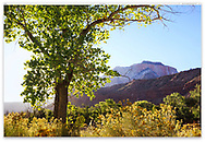 A backlit tree and mountains at Zion National Park, Utah, USA