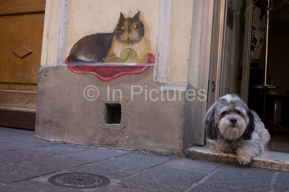 Pet dog and cat drawing in the northern Italian south Tyrolean city of Bozen-Bolzano. The cute scene is seen at ground level, looking low to the small pooch that sits on the step of a local shop alongside the drawing of a homely cat.