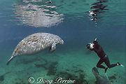 underwater photographer and Florida manatee, Trichechus manatus latirostris, King Spring, Crystal River National Wildlife Refuge, Crystal River, Florida, USA