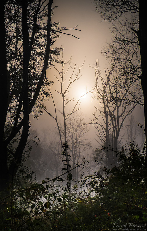 Rising sun in the woods.