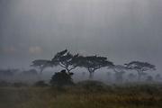 A rainstorm hits the plains of Serengeti.
