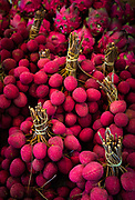 """Lychee fruits at street market in New York's Chinatown. The lychee is the sole member of the genus Litchi in the soapberry family, Sapindaceae. It is a tropical and subtropical fruit tree native to the Guangdong and Fujian provinces of China, and now cultivated in many parts of the world. The fresh fruit has a """"delicate, whitish pulp"""" with a floral smell and a fragrant, sweet flavor. Since this perfume-like flavor is lost in the process of canning, the fruit is usually eaten fresh."""