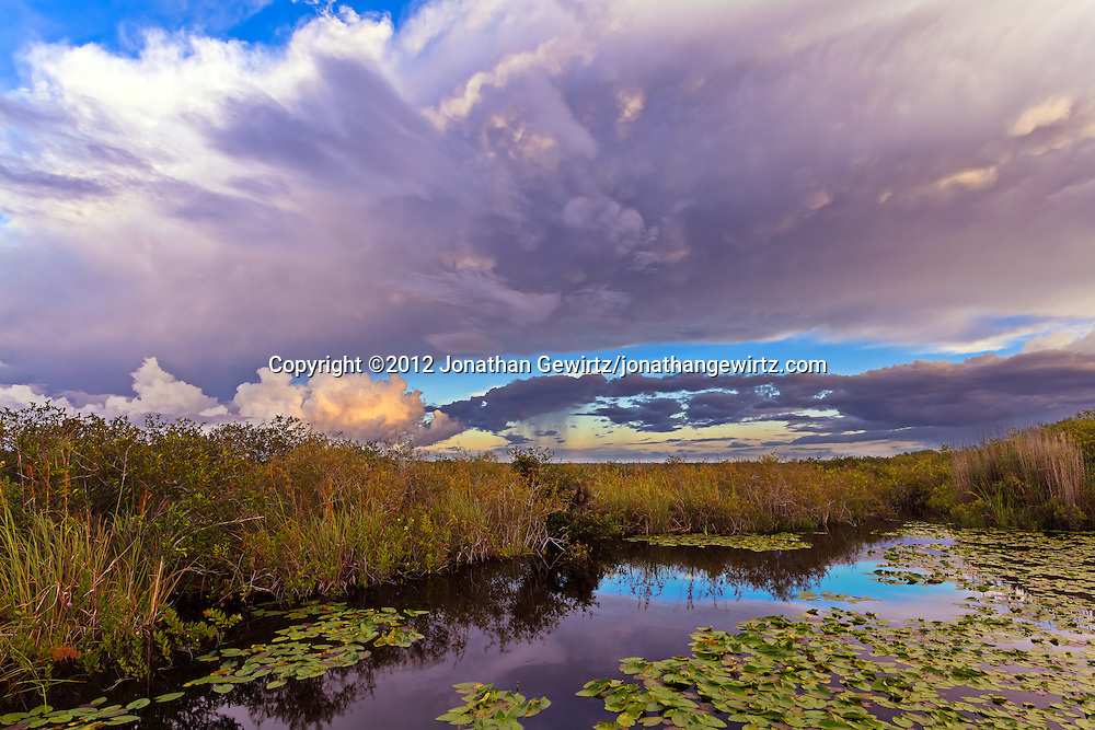 Morning rain showers pass over Taylor Slough near the Anhinga Trail in Everglades National Park, Florida.<br /> <br /> WATERMARKS WILL NOT APPEAR ON PRINTS OR LICENSED IMAGES.<br /> <br /> Licensing: https://tandemstock.com/assets/92009028