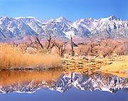 Lone Pine Pond, Owens Valley, CA
