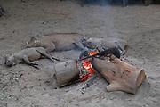 View of Warthogs (Phacochoerus africanus) family sleeping by fire, Mlilwane Wildlife Sanctuary, Eswatini