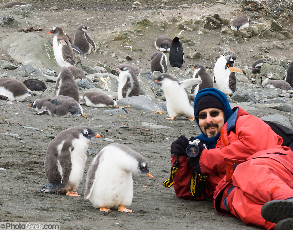 "A man in red clothing photographs Gentoo Penguins (Pygoscelis papua) on Aicho Island, Antarctica. ""Don't approach penguins closer than 15 feet,"" says an Antarctic tourism rule in 2005. But if you lie down on the ground more than 15 feet away, a curious Gentoo Penguin chick may approach you. An adult Gentoo Penguin has a bright orange-red bill and a wide white stripe extending across the top of its head. Chicks have grey backs with white fronts. Of all penguins, Gentoos have the most prominent tail, which sweeps from side to side as they waddle on land, hence the scientific name Pygoscelis, ""rump-tailed."" As the the third largest species of penguin, adult Gentoos reach 51 to 90 cm (20-36 in) high. They are the fastest underwater swimming penguin, reaching speeds of 36 km per hour. This photo was licensed to the Antarctic and Southern Ocean Coalition (ASOC) for publication in the scientific journal Antarctic Science and for use in a poster for the June 2011 Antarctic Treaty Consultative Meeting. For licensing options, please inquire."