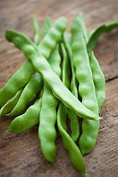 French Bean 'Helda' . Helda beans, Flat beans, Romano beans. Phaseolus vulgaris