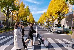 Ruas arborizadas do distrito de Shinjuku, Japão. FOTO: Jefferson Bernardes/Preview.com