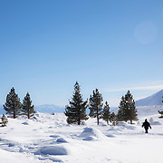 A man walks along the Mammoth Lakes Town Loop during strong winds following a winter storm.