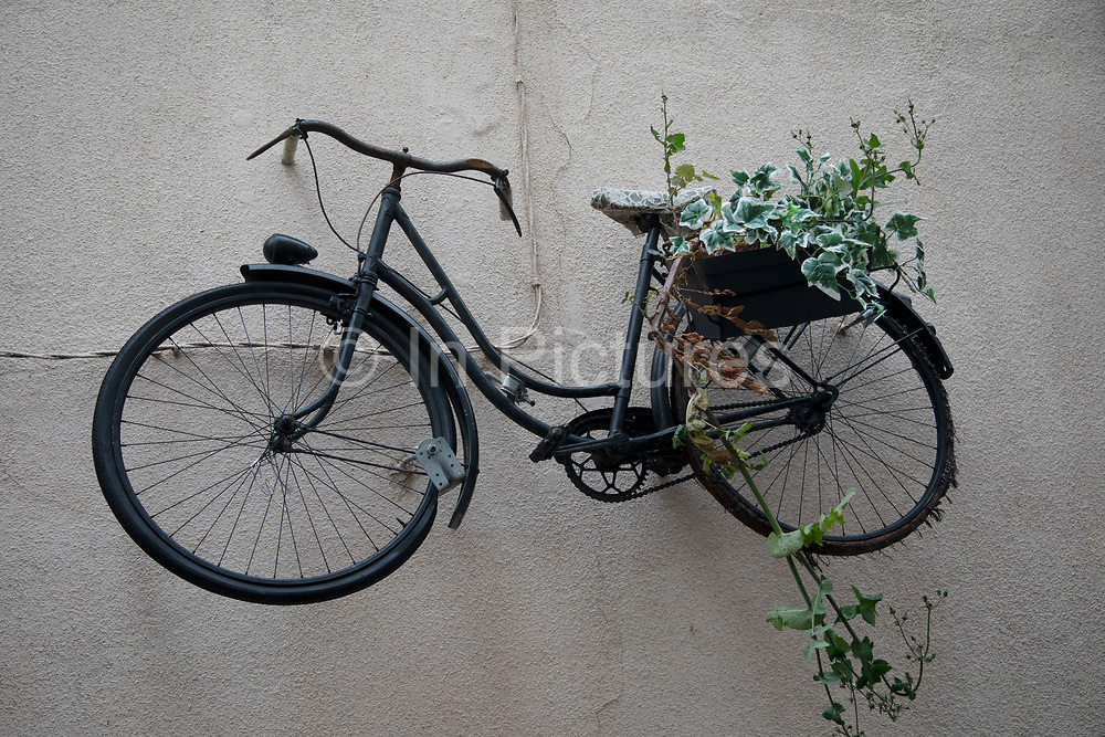 Bicycle mounted on a wall and growing plants in Narbonne, France.