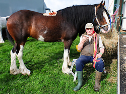 © Licensed to London News Pictures.26/08/15<br /> Egton, UK. <br /> <br /> Robert Pearson from Robin Hood's Bay sits with a cup of tea next to his horse at the 126th Egton Show in North Yorkshire. <br /> <br /> Egton is one of the largest village shows in the country and is run by a band of voluntary helpers. <br /> <br /> This year the event featured wrought iron and farrier displays, a farmers market, plus horse, cattle, sheep, goat, ferret, fur and feather classes. There was also bee keeping, produce and handicrafts on display.<br /> <br /> Photo credit : Ian Forsyth/LNP