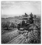 Vineyard workers on truck at Mayacamas, Napa Valley.