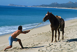 Man on the beach trying to pull his stubborn horse in Mexico