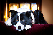 Teresa Kennedy & Lucky, a border collie/karelian bear dog mixed breed rescue (9 years old)