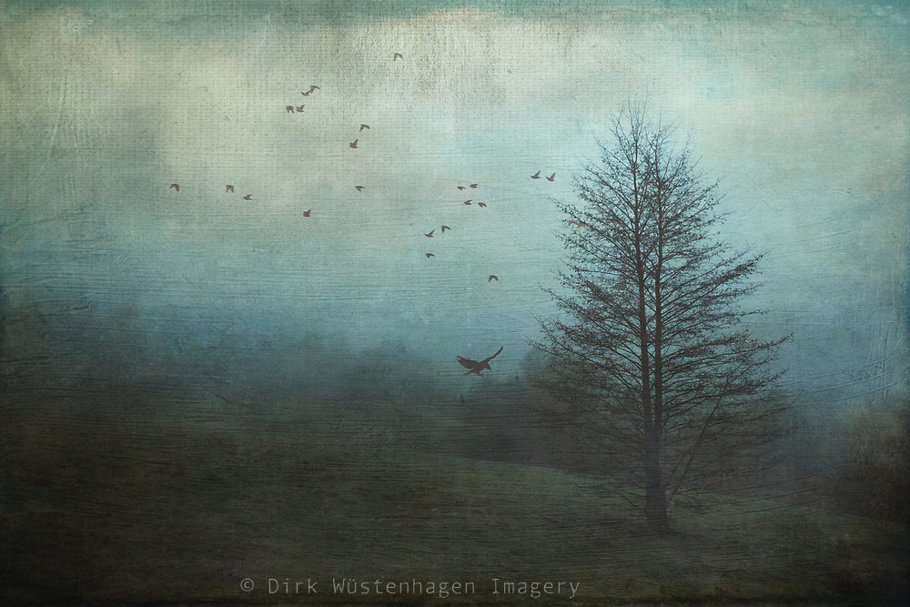 Meadow with a single tree on a misty morning - textured photograph