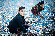Myanmar, Ngapali. Two young girs work drying fish.<br /> Every single morning all the fisherman from the little village at Ngapali Beach come back home with their night catch. At the beach all the women wait for them and afterwards work with drying and selling fish and other creatures from the sea begins.