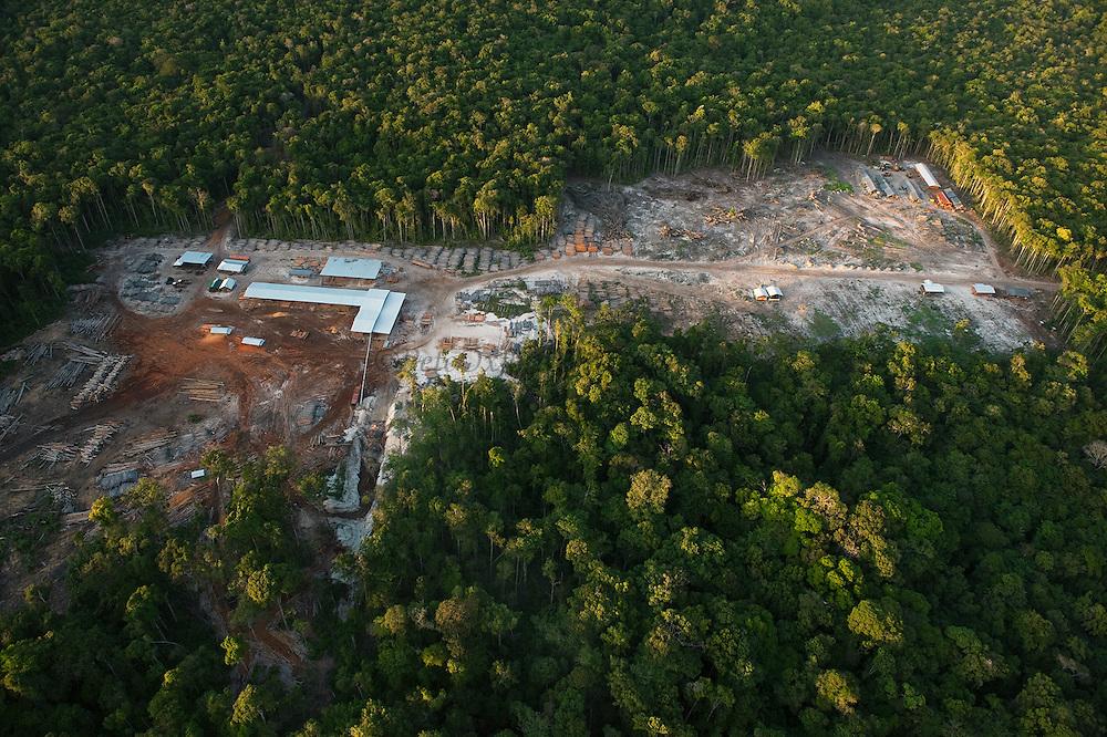 Low Impact Logging<br /> Rainforest<br /> Iwokrama Reserve<br /> GUYANA<br /> South America