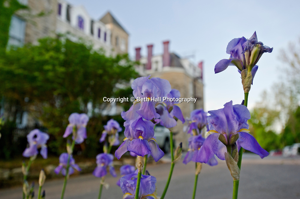 Stock photography of purple Irises by the historic Crescent Hotel in Eureka Springs, Arkansas.