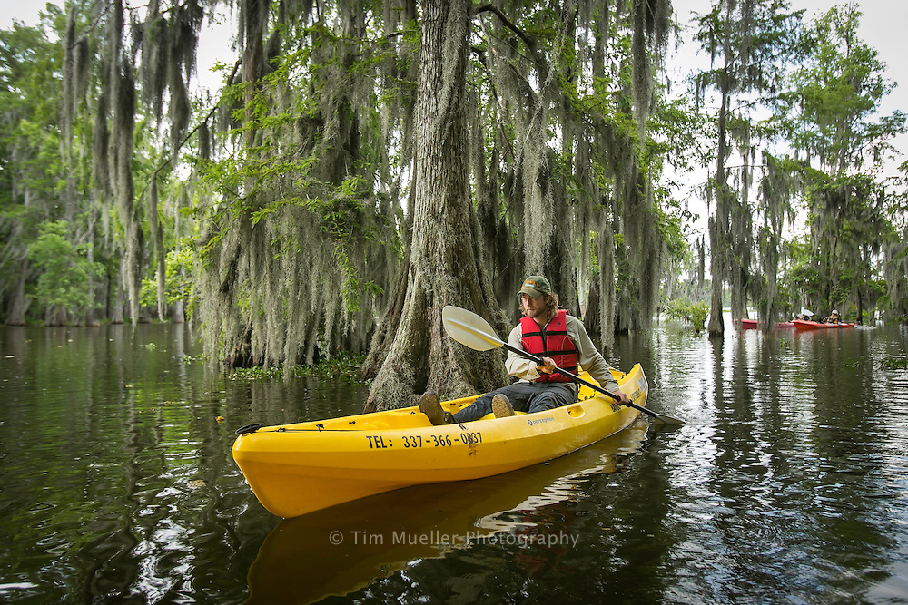 Cory Werk of Bayou Teche Experience glides through cypress trees in Lake Martin in St. Martin Parish, La. Werk is owner of Bayou Teche Experience which offers kayak and bike rentals to explore the Cajun country bayous, lakes, and swamps of south Louisiana.