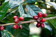 Shade-Grown Coffee
