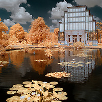 Infrared image featuring the Jewel Box in St. Louis Missouri reflected in one of the lily ponds located in front.