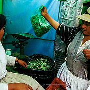Green bags of dried coca leaves for sale in a roadside stall in Potosi. In Bolivia and Peru, coca leaf chewing was an ancestral tradition with a long history. Potosi, Bolivia.