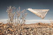 08/11/2014 - Uyuni, Bolivia:Plastic tree #20. Plastic bags are part of the landscape of the Bolivian Altiplano. The accumulation of plastic bags on the environment cause deterioration of the landscapes and agriculture soils and it is associated to the death of domestic and wild animals.