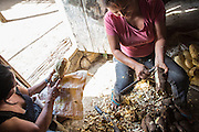Cassava is first peeled by hand and then ground for the flour preparation (Katoonarib, South Rupununi).