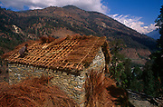 A villager lays fresh straw over the roof rafters of a building with the backdrop of Himalayan foothills and snow-tipped mountain peaks, on 10th November 1995, in Ghorepani, Himalayas, Nepal,