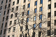 a bare tree beside the Exchange Building Facade at 2nd and Marion in downtown Seattle, Washington state, USA