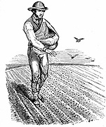 Crop Rotation: Sowing seed broadcast. In Norfolk 4-course system, wheat planted first year, followed by turnips, then barley often underplanted with grass or grass & clover ley to be used for hay or grazing in 4th year. Engraving 1855