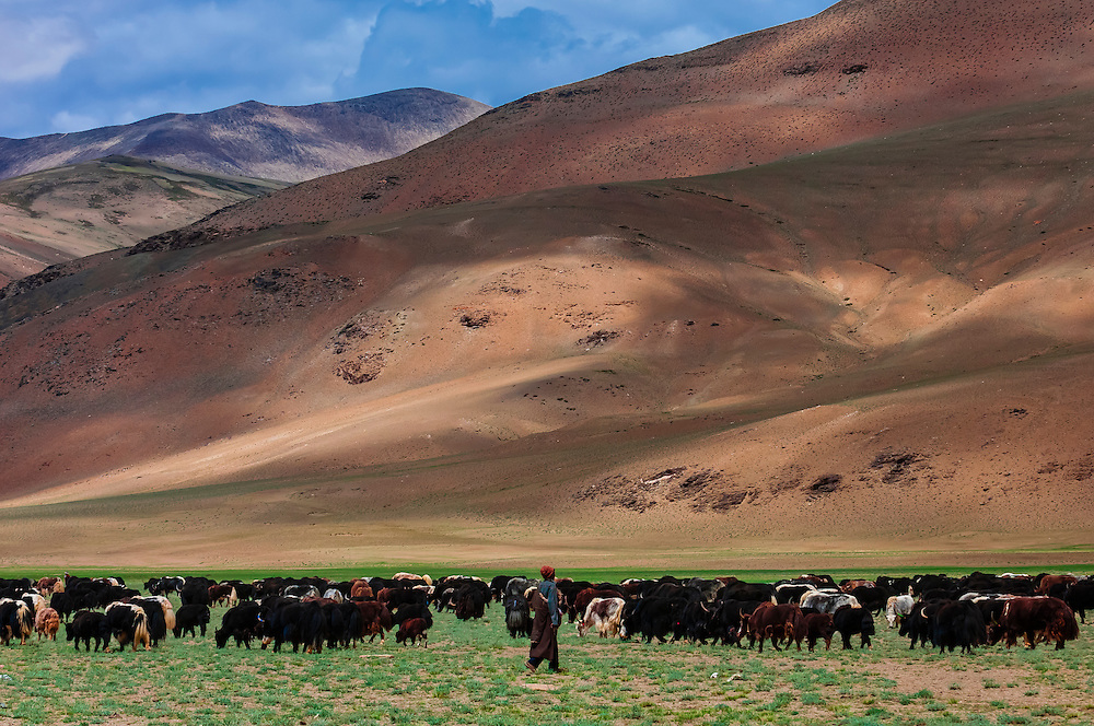 Nomadic Yak herders in the Himalayas, near Pang, Ladakh, Jammu and Kashmir State, India.