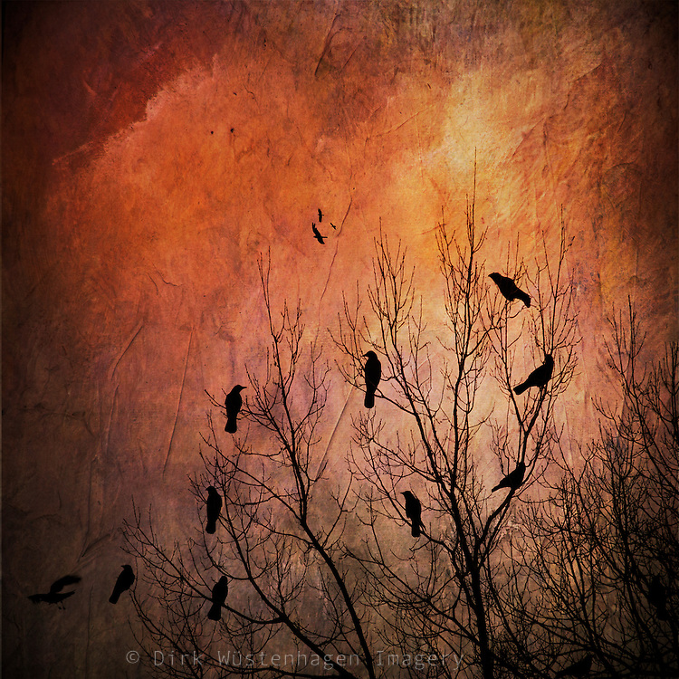 Crows on a tree in fall - texturized photograph