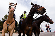 Police horses pose on St Kilda Beach during the final days of the worlds toughest and longest COVID-19 restrictions in St Kilda.  With 21 days of zero new cases, Premier Daniel Andrews is expected to announce major easing of restrictions, including masks, at his press conference on Sunday. (Photo by Dave Hewison/Speed Media)