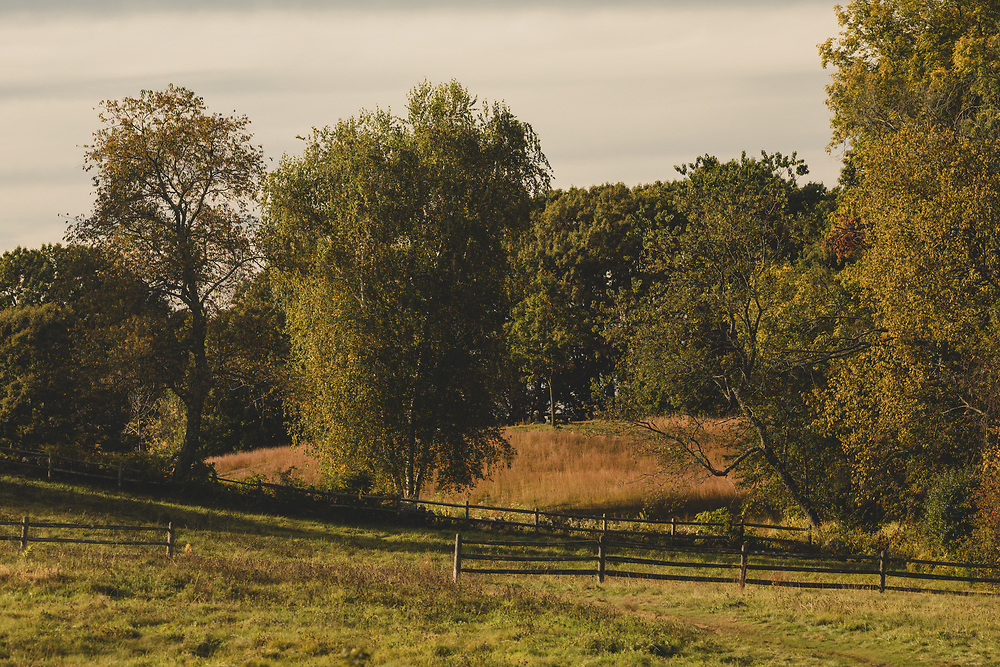 Afternoon sunlight shining upon a rolling pasture in Lexington.