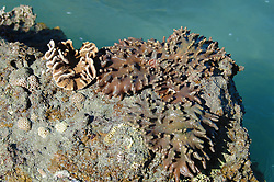 A variety of corals and sponges line the edge of the reef on Wailgwin Island.  The corals are exposed to the elements at low tide.