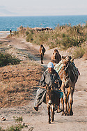 Tunis, Egypt - March 1, 2011: An Egyptian man smoking a cigarette rides on his donkey, followed by several camels, in Tunis, a village in the Fayoum Oasis. Lake Qarun, a saltwater lake 43 meters below sea level, is in the background.