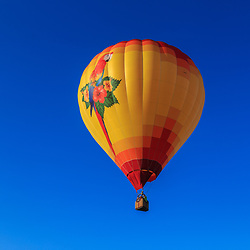 Avondale, PA, USA - June 24, 2018: A hot air balloon with a large parrot in flight at the Chester County Balloon Festival at the New Garden Flying Field in Toughkenamon.