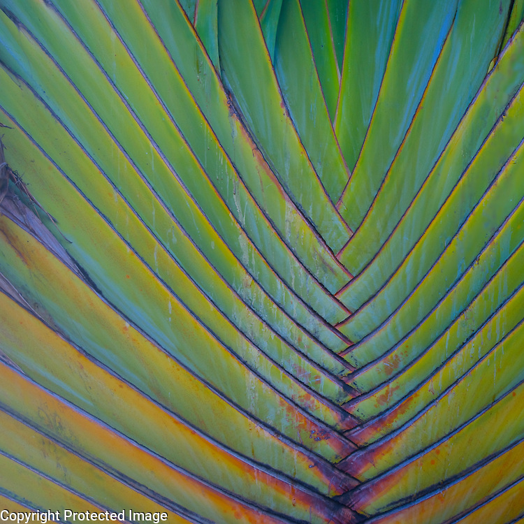 I think this tropical palm is one of the coolest looking plants ever. This one was outside a little market on Kauai where we got coconut water and breakfast goodies.
