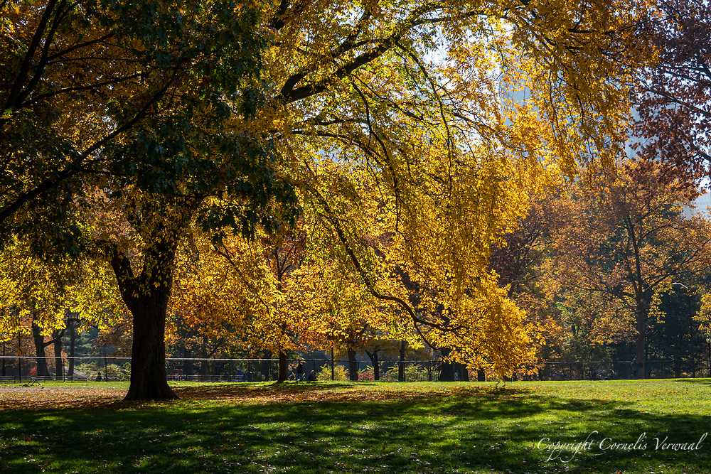 Autumn colors along the Sheep Meadow in Central Park