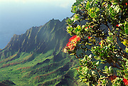 Ohia tree, Kalalau Lookout, Kauai, Hawaii<br />