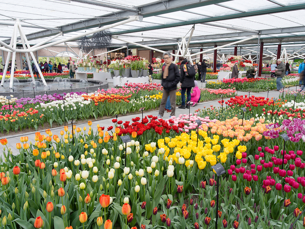 Visitors walk through and enjoy the many different flower displays at Keukenhof Gardens, Lisse, The Netherlands.