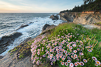 Wildflowers on headland of Shore Acres State Park Oregon