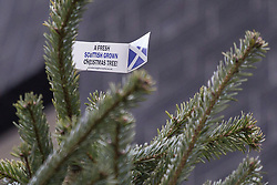 """© licensed to London News Pictures. London, UK 30/11/2012. A tag attached on the top of the Downing Street Christmas Tree reading """"A fresh Scottish grown Christmas Tree!"""" outside No 10 on 30/11/12. The tree is a Nordmann Fir grown in Scotland by Mike Craig. Photo credit: Tolga Akmen/LNP"""