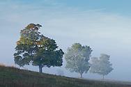 Goshen, New York -  Early  morning fog over farm fields on Sept. 24, 2014.