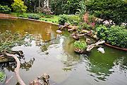 Asia, Southeast, People's Republic of China, Hong Kong. Flamingoes in Kowloon Park, Tsim Sha Tsui