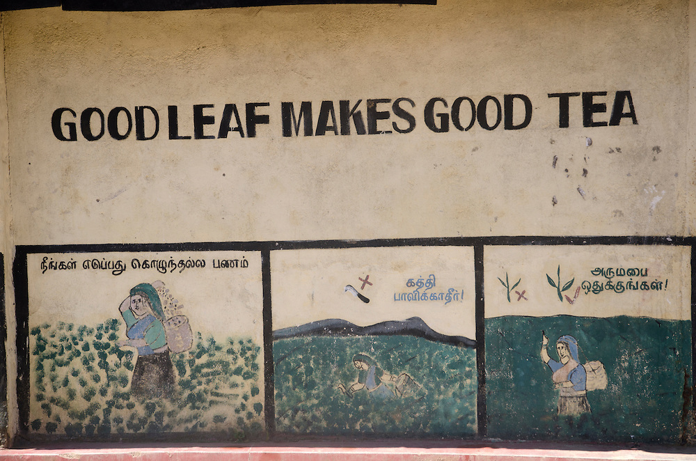A writing on the wall on the Pedro Estate, near Nuwara Eliya, Sri Lanka