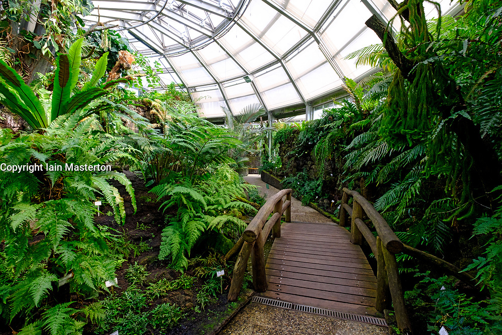 Many varieties of fern in greenhouse at Berlin Botanical Garden in Dahlem, Berlin, Germany