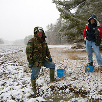 Local residents visit Damariscotta, Maine River at mean low tide to harvest fresh river oysters during a winter snow.